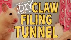 ☆HAMSTER DIY☆ Claw Filing Tunnel [How to Clip Your Hamster's Claws]