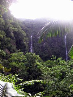Les plus belles cascades de Martinique – Carnet d'un Antillais Les Cascades, West Indies, North America, Plant Leaves, Destinations, Travel, Character, Pathways, Beauty