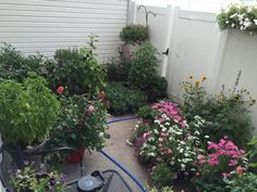 My patio garden at its best #gardening #garden #DIY #home #flowers #roses #nature #landscaping #horticulture