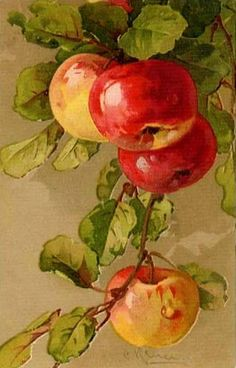 acrylic painting of apples - Yahoo Image Search Results