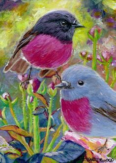 Pink Breasted Robin Birds Roses Spring ACEO Original Art Painting #Realism