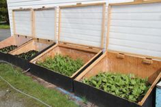 Easy, DIY instructions for first-time cold frame builders.