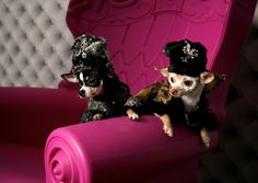 Anthony Rubio's Tapestry Coats | Anthony Rubio Designs - Dog Fashion