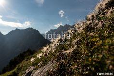 Hiking in the morning hours in the mountains of Austria – kaufen Sie dieses Foto und finden Sie ähnliche Bilder auf Adobe Stock Austria, Hiking, Journey, Mountains, Photography, Travel, Walks, Photograph, Viajes