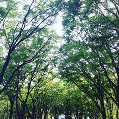 名古屋の伏見あたりは公園が多いのが良いなでも自転車の95%は無灯火あと自転車レーンあるのに歩道を爆走してるなんで