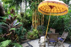 Tropical gardens sunnybank Brisbane.  Hope to  see this one day. Tropical Garden Design, Tropical Backyard, Tropical Gardens, Tropical Landscaping, Tropical Plants, Garden Landscaping, Landscaping Ideas, Backyard Ideas, Parasol