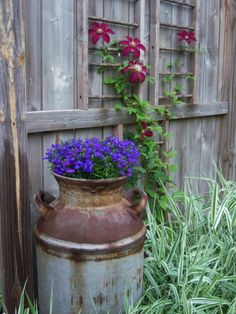 "Nice photos in the click-through post ""Funky Garden Junk"" -- Shown: ""A milk can gives home to Lobelia 'Royal Blue' with clematis 'Niobe' nearby."" Zamiska Zamiska Dinnocenti I even have one of these to use ; Rustic Gardens, Outdoor Gardens, Old Milk Cans, Milk Jugs, Milk Cartons, Patio Pergola, Backyard, Garden Junk, Hippie Garden"