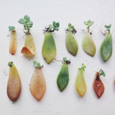 How to propagate succulents: a guide