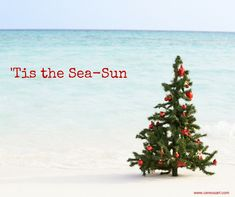 Beach Quote: Tis the Sea-Sun - Tap the link to shop on our official online store! You can also join our affiliate and/or rewards programs for FREE! Aussie Christmas, Christmas In July, Christmas Photos, Holiday Fun, Christmas Cards, Beach Christmas Pictures, Christmas Ideas, Holiday Ideas, Christmas On The Beach