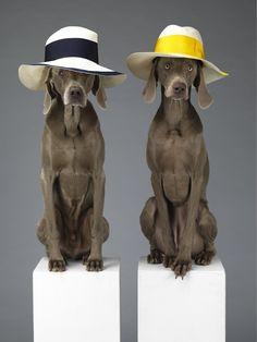 Dieren in mode- en reclamefotografie