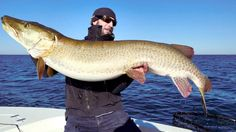 This MN man was having #FunInTheSun when he recently caught this 57 inch muskie on Lake Mille Lacs.