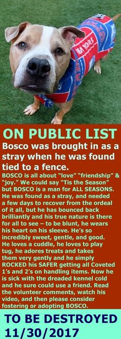 MURDERED 11/30/17 --- Hello, my name is Bosco. My animal id is #14333. I am a desexed male tan dog at the Manhattan Animal Care Center. The shelter thinks I am about 4 years 1 weeks old. I came into the shelter as a stray on 21-Nov-2017. Bosco is at risk for medical reasons, having been diagnosed with Canine Infectious Respiratory Disease http://nycdogs.urgentpodr.org/bosco-14333/