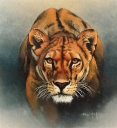 """During March, The Galleries at 20 Baltimore Avenue will be featuring a variety of works that will appeal to the heart of the lion or lioness in everyone. Click """"Amber Encounter"""" by Fuz Carafe painting to read entire art gallery article: March comes in like a lion at The Galleries at 20 Baltimore Avenue"""