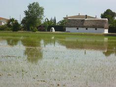 Delta del Ebro. Barraca Vilbor
