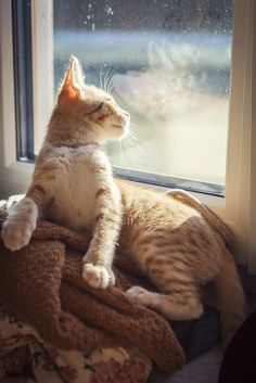 Orange tabby cat, window reflections.