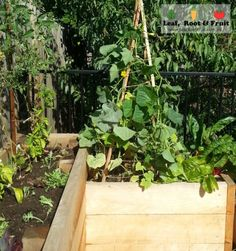 We provide custom made, raised veggie gardens using cypress sleepers. Rot & termite resistant without treatment, they are the safest option for veggie gardens. Veggie Gardens, Fruit Garden, Wicking Beds, Raised Garden Beds, Veggies, Leaves, Plants, Vegetable Gardening, Vegetables Garden