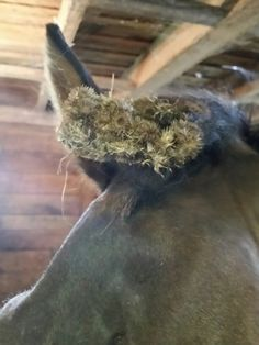 Removing burrs and stickers… http://www.proequinegrooms.com/index.php/tips/grooming/how-to-deal-with-stickers-and-burrs-stuck-on-your-horse/