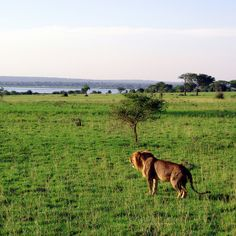 Queen Elizabeth National Park | Flickr - Photo Sharing!