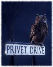 owls from harry potter movie images | The start of the Harry Potter story, Harry Potter gets delivered to ...