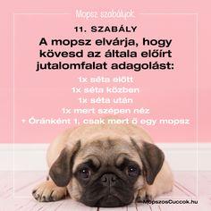 Mopsz szabályok - a békés együttélésért vagyis a mopsz kényelméért Pitbull, Buldog, Memes, France, Creative, Pit Bull, Meme, Pit Bulls, Pitbulls