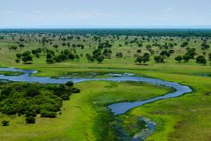 Pantanal Wetlands in Brazil...better than the Amazon if you want to see natural wildlife