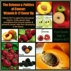 Some Anti-Cancer Fruits.  These healthy fruits have high Vitamin B17 content in them, so don't forget to add some of these to your juices and meals today!  SHARE this to friends and family..