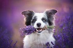 Alicja Zmysłowska fotói szinte életre keltik a pillanatokat: az ember szinte érzi az orrában a levendula csábító illatát, hallja a kutyák vidám csaholását, érzi a nap melengető kedves fényét… Akár egy tündérmesében.