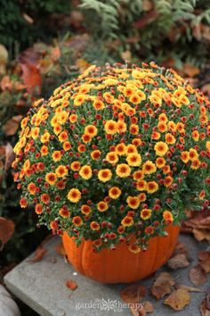 Hardy mums – Grow These Fall Perennials for Brilliant Autumn Color! Fall perennials provide such a show in the garden for us gardeners, but also are an essential food source for our winged friends, bees, and other pollinators. Fall Blooming Flowers, Fall Flowers, Colorful Flowers, Wedding Flowers, Mum Planters, Hardy Mums, Caring For Mums, Fall Perennials, Mums In Pumpkins