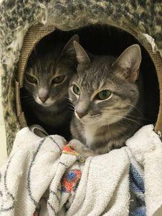 Selphie & Luna