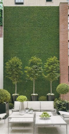 green wall with potted trees in small urban garden...