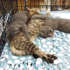 Beautiful 3 cats cuddling each others