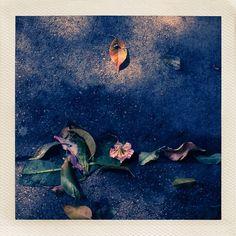 """What Lay On The Horizon"" #LightAndShadow #LightAndShadowSeries #waterscape #Sidewalk #Memories #emotion #Mysteries #SidewalkComposition #Flowerscape #Horizon #WhatLayOnTheHorizon #Emerging #Voice #Light #Shadow #WomenPhotographers #botanica #FlowerPhotography #flowers #Vintage #photography #Art #Artwork #VintagePolariod #photograms #Instagram #iphone #iphoneography #iphoneart #Sunday"