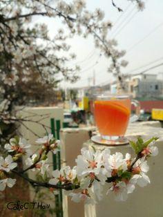 앵두꽃과 자몽차