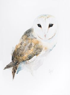 Buy Barn owl, Watercolour by Andrzej Rabiega on Artfinder. Discover thousands of other original paintings, prints, sculptures and photography from independent artists. Watercolor Bird, Watercolor Paintings, Original Paintings, Watercolors, Bird Paintings, Exotic Birds, Colorful Birds, Owl Art, Bird Art