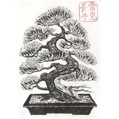 Bonsai Tree Drawings | Bonsai Tree Drawing Bonsai print drawing