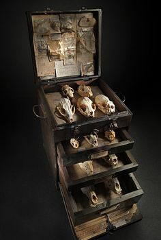 We have a lot of found animal skulls, I need a pretty way to display them.