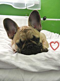 #sleepyhead #frenchie