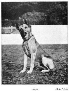 History of the Belgian Sheepdog/ Geschichte des Belgischen Schäferhundes (Facebook)*