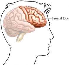 this is the location of the frontal lobe in the brain