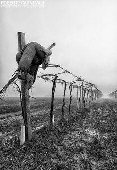 Bitter land - (Terra amara) | Italian emotive landscape photography in black and white (Modena, Italy) | © Roberto Carnevali