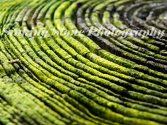 Color Nature Photography  Green Moss  Forest by sinkingstone, $15.00