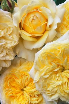 Yellow roses and peony roses