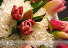 Pink tulips and white carnations
