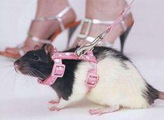 крыса - Поиск в Google