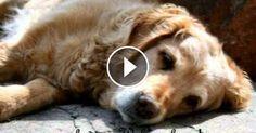 Abschied nehmen - Ein Hund erzählt vom Tod. Sehr traurig, wenn das eigene Haustier stirbt. Echt echt bewegendes Lied von Abscheid und Trauer!  Mehr dazu => Unten im Video!                  (Länge: 04:02)