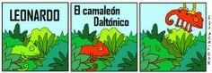El camaleón daltónico Mala especie para padecer esto…