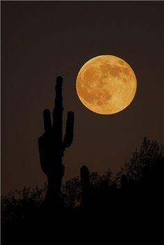 Moon rise with Saguaro Phoenix AZ