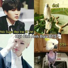 Read 1 from the story BTS by nuetituhe with reads. Suga Funny, Bts Young Forever, Bts Funny Moments, Billboard Hot 100, Min Suga, Yoonmin, Bts Bangtan Boy, Bts Memes, Troll