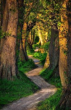 Path through the trees