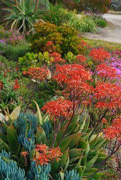 paradis express: Garden Book, blog d'or!